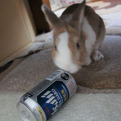 とちと缶ビール1