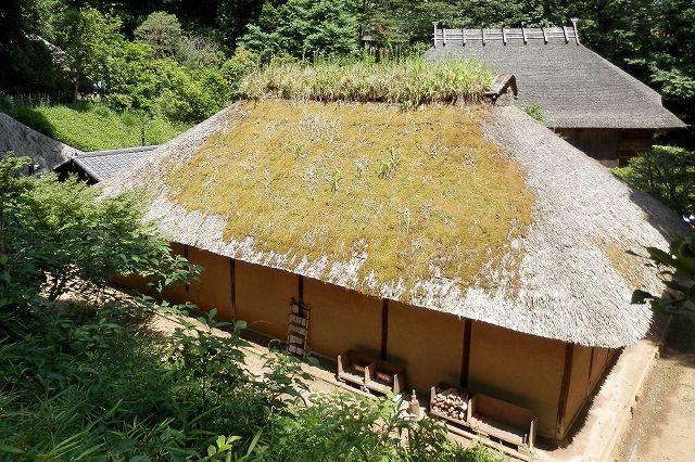 清宮家の屋根