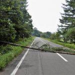 道路が倒木で塞がっていたらどうしますか?