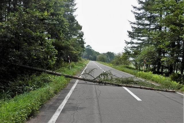 道路をふさぐ倒木