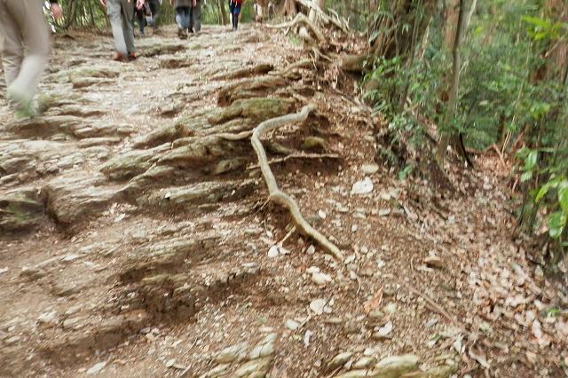 稲荷山コースの岩