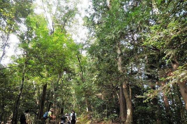 稲荷山コースの植生