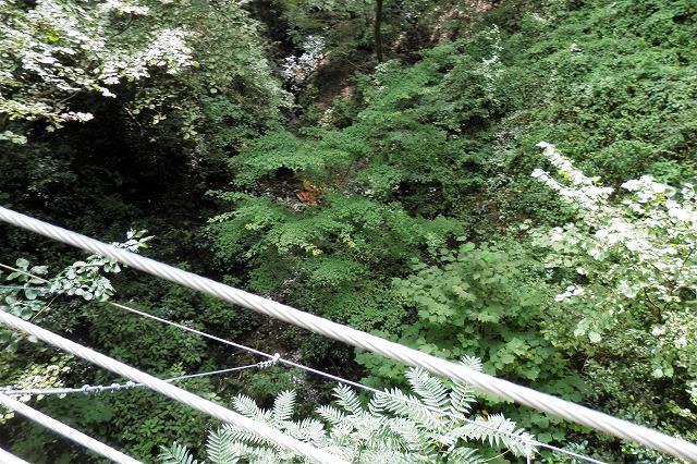 4号路吊り橋から