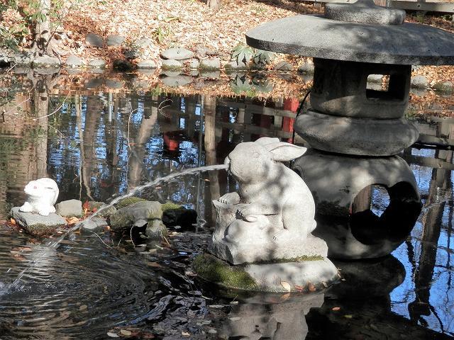 池のうさぎ