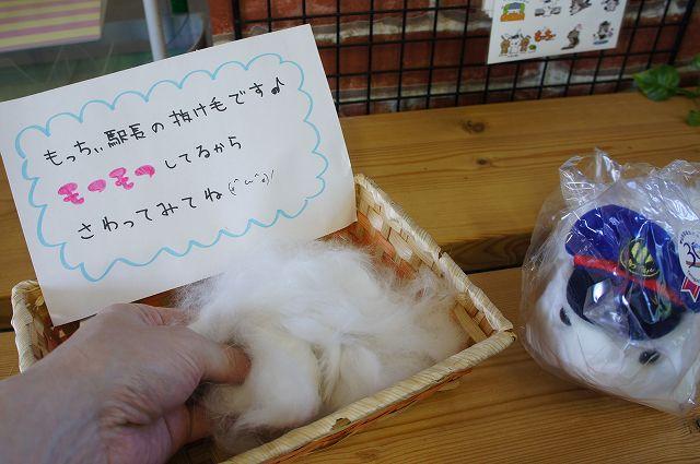 もっちぃの抜け毛2