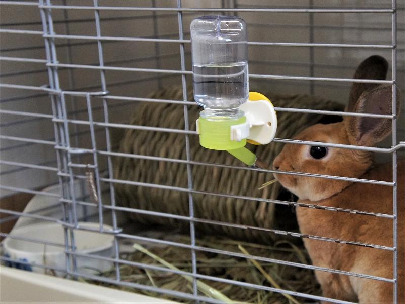 かがりのケージに水ボトルと水皿がある様子
