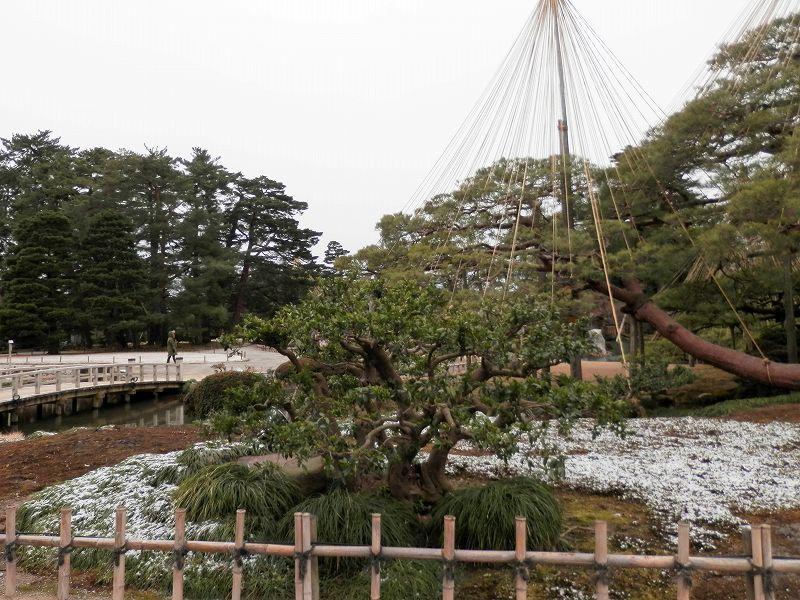 霞ヶ池のふちの雪2(兼六園)