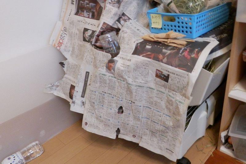 かがりのケージに新聞紙をかぶせてある様子